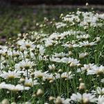 mayo florido
