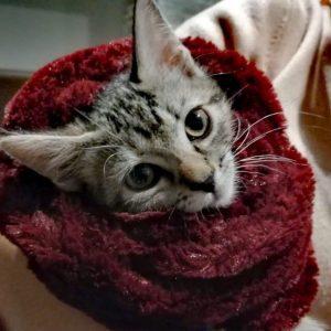 Gato de Irene