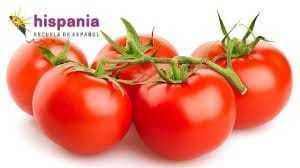 ponerse como un tomate